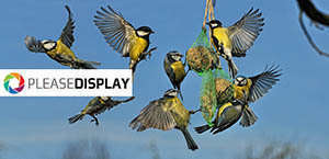 Please display birds min