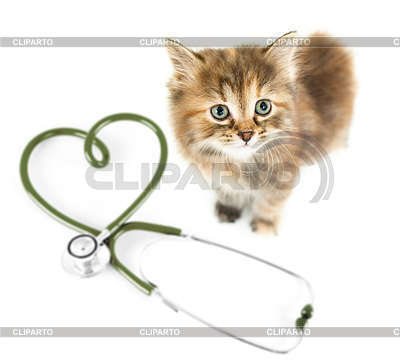 4646909 cat of above veterinary for pets concept
